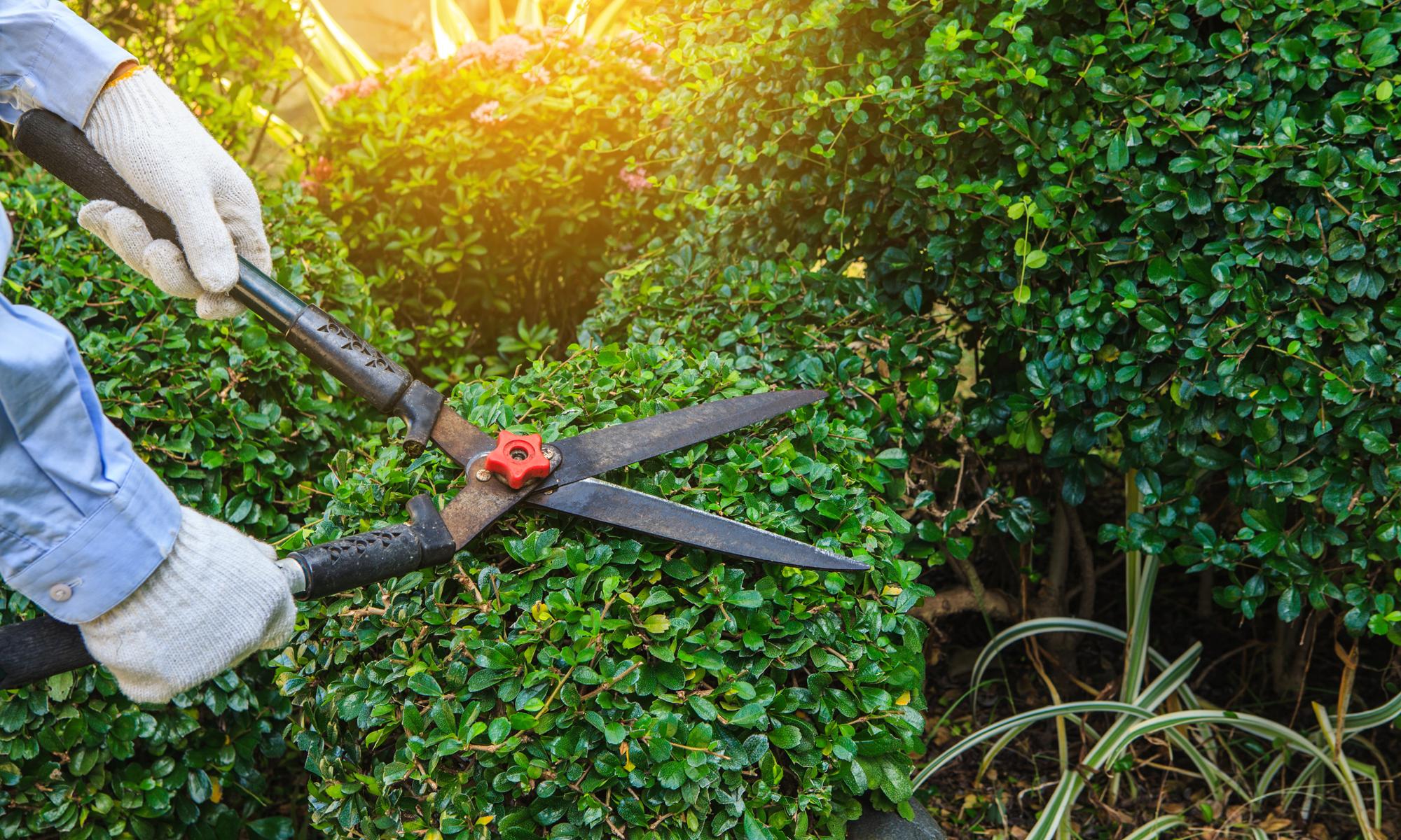 DecoMax Landscaping Commercial Shrubs Maintenance