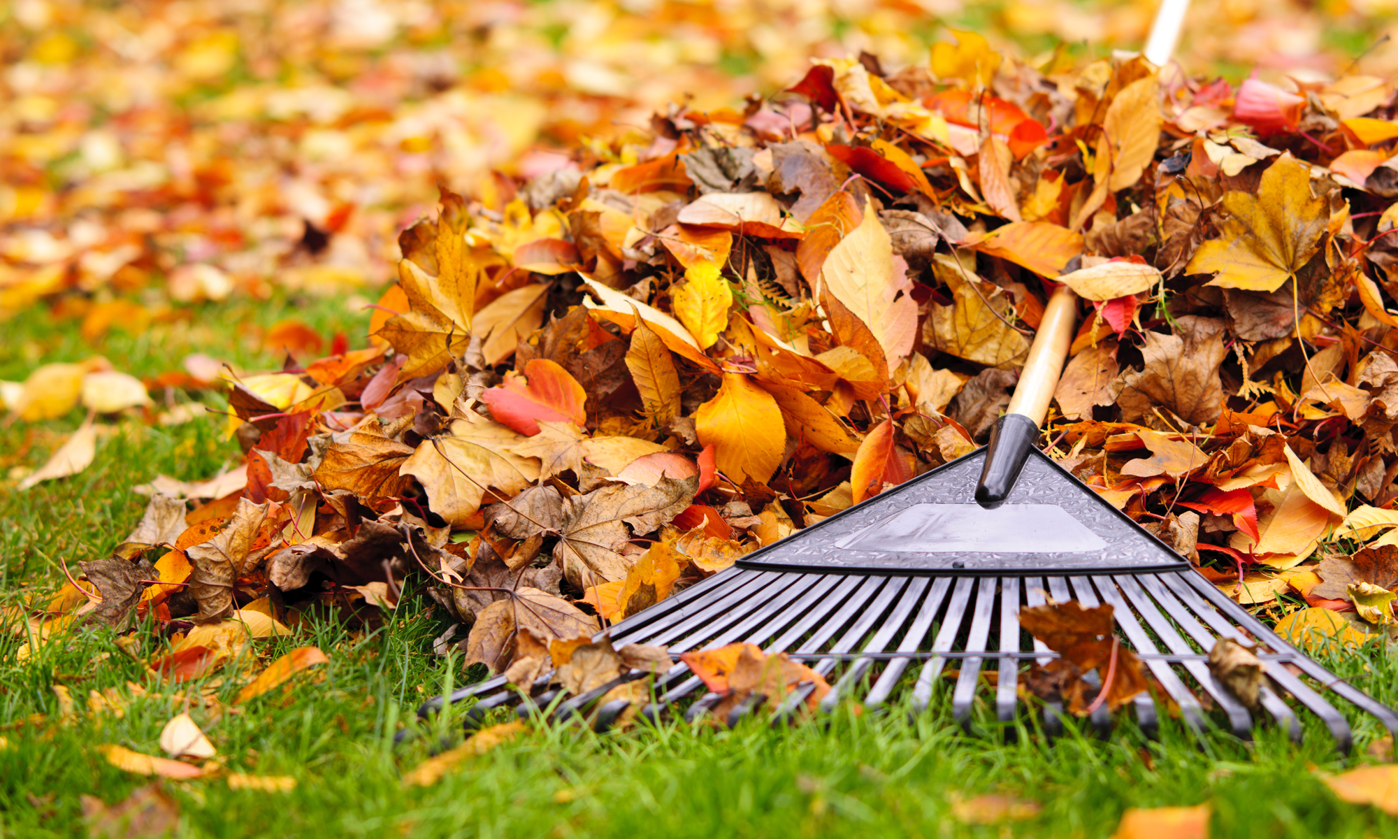 DecoMax Landscaping Commercial Spring and Fall Clean Up